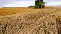 Welcome moisture in key wheat growing regions of the United States and Europe are moderat ing the production worries that had been affecting prices. | Reuters photo