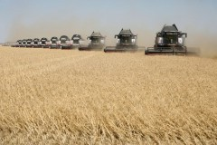 Export prices of wheat, Russia has jumped in the Wake of lower crop forecasts
